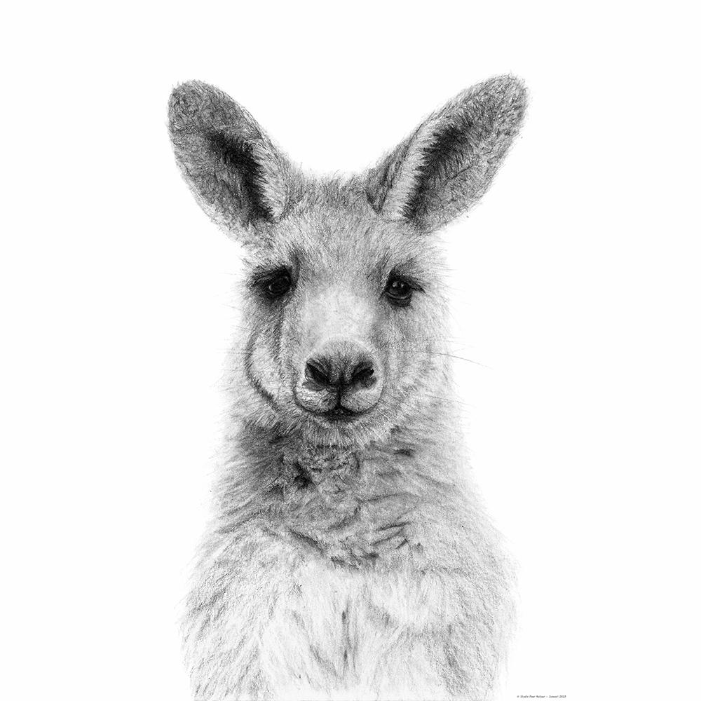 Kangoeroe (voorbeeld 50x50 zonder witrand voor PassePartout)