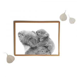Koala (voorbeeld sfeerbeeld)