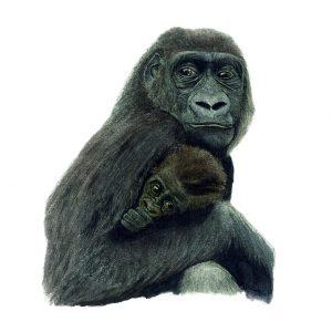 Illustratie aquarel moeder gorilla met haar baby