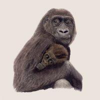 Goede doelen gorilla tekening